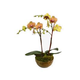 Plant-20