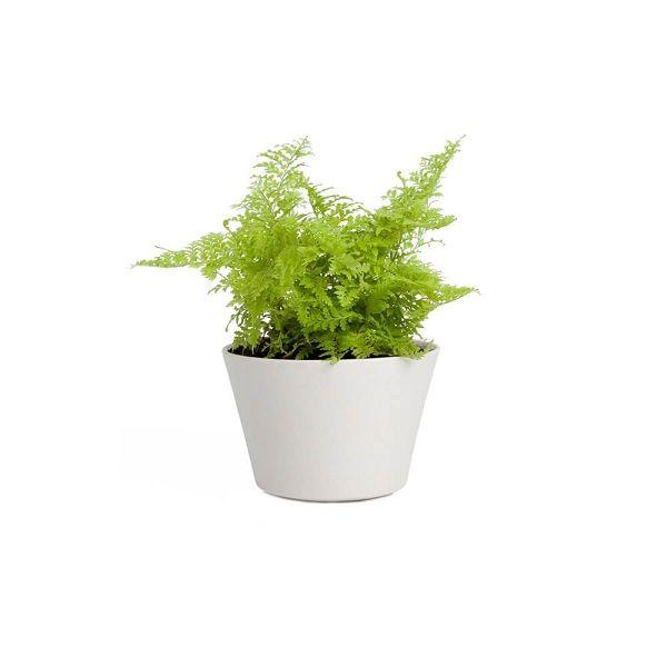 Plant-14