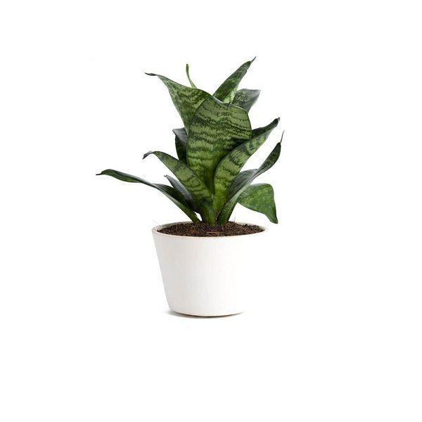 Plant-12