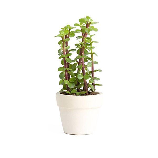 Plant-16