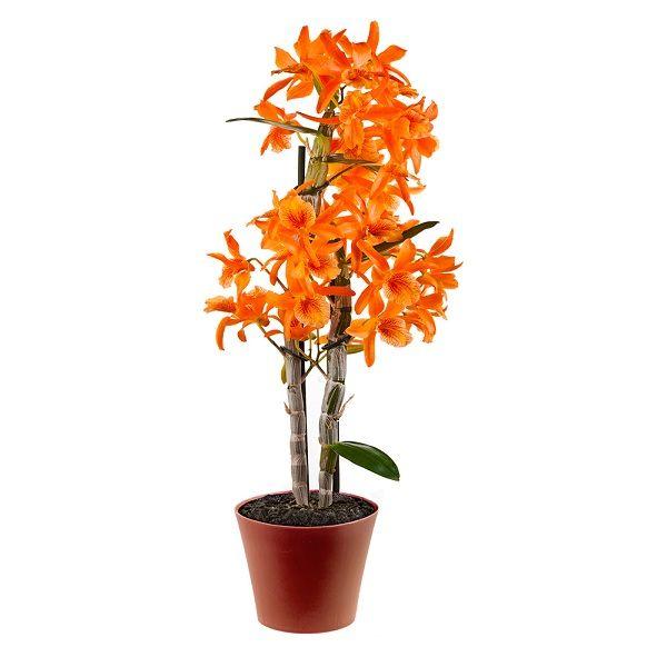 Garden Plant-3